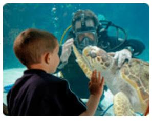 newport aquarium summer family hours get in free