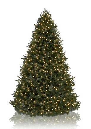 Balsam Hill Christmas Trees 70 Off