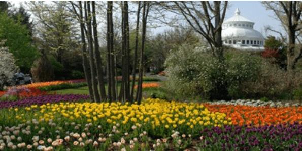 Cincinnati Zoo Tunes Amp Blooms Free Concerts