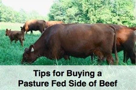 how to buy a pasture fed side of beef