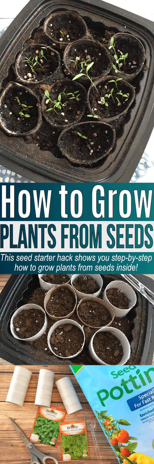 Learn how to grow seeds indoors so you can start growing plants from seeds inside! This step-by-step seed planting guide helps you grow plants from seeds fast - within 7-10 days before the seeds start to grow!