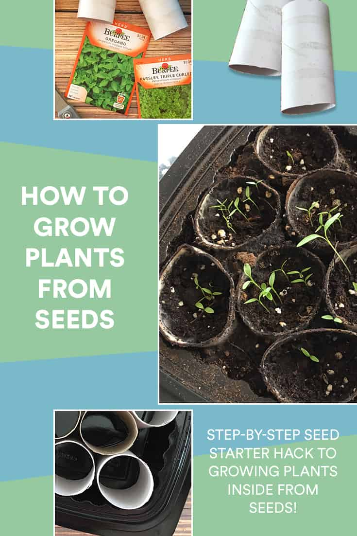 Follow this easy tutorial to learn how to grow seeds indoors! Grow your interest as well as savings! via @AndreaDeckard