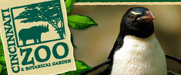 Cincinnati Zoo Penguin Days 1 2 Price Admission